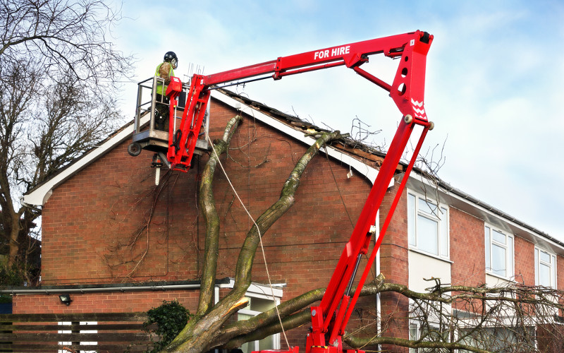 EMERGENCY TREE SERVICES, Tree Services