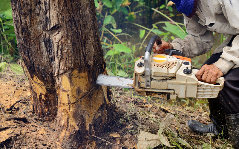 TREE CUTTING, Tree Services