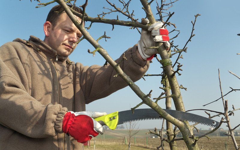 TREE PRUNING, Tree Services