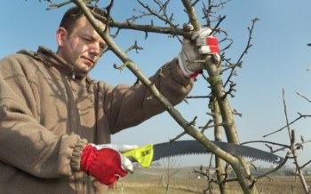 Pruning Services in Toronto