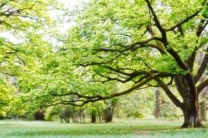 Tree Assessment in Toronto