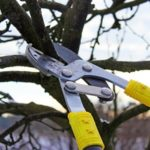 Tree Pruning Toronto